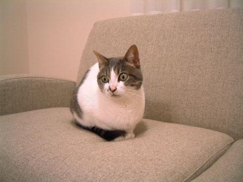 ソファの上にちょこんと座るハナ