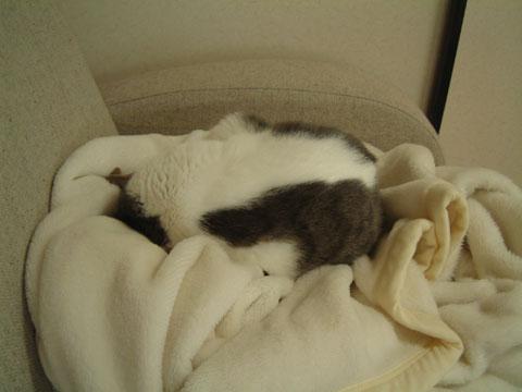 丸まって眠るハナの後ろ姿