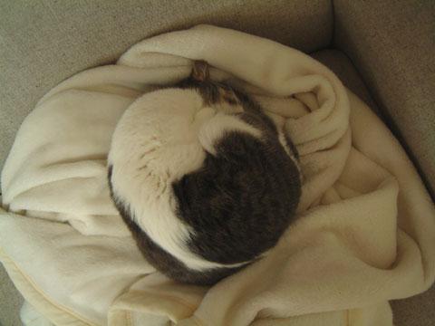丸まって眠るハナを上から