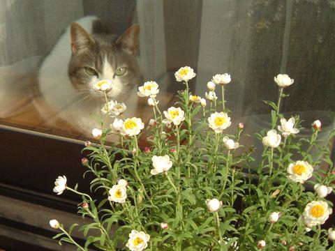 窓の外からみたハナと花