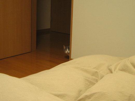 寝室のドア付近から部屋をのぞくハナ