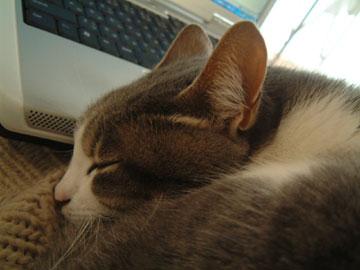 ヒザの上で眠るハナの顔
