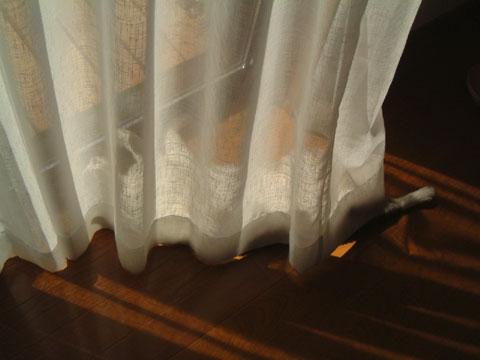 カーテンの中でお腹丸出しで眠るハナ