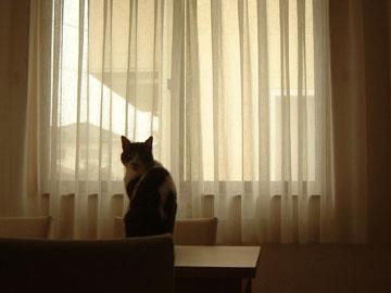 テーブルの上に座り振り向くハナ
