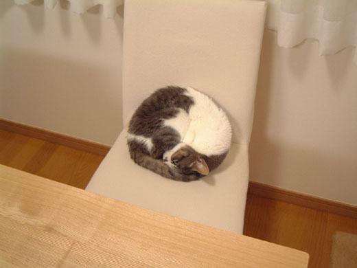 イスの上で丸の形で眠るハナ