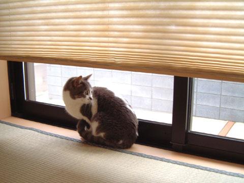 窓辺にお座りして外を眺めるハナ