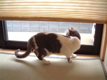 窓の外の左のほうを確認するハナ