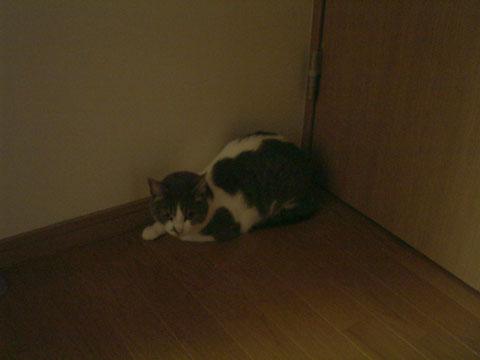 廊下の隅っこに身をひそめるハナ