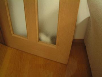 ドアと壁の隙間に潜むハナを横から