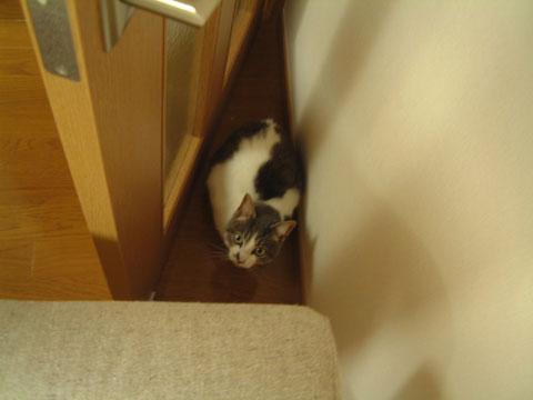 ドアと壁の隙間に潜むハナを上から