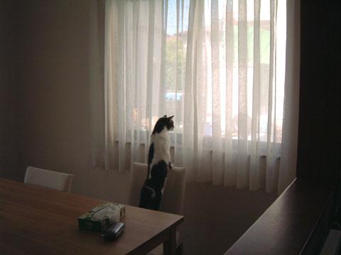 イスの背もたれに手をおいて窓の外を見渡すハナ