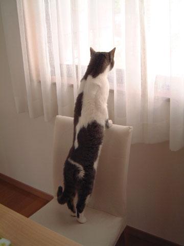 イスの背もたれに手をおいて窓の外を見渡すハナのアップ