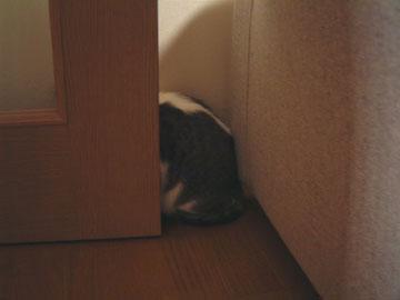 ドアのすきまに上半身だけおさまっているハナ