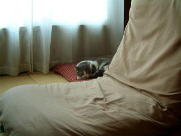座布団の上で寝るハナ